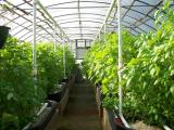 Folia ogrodnicza